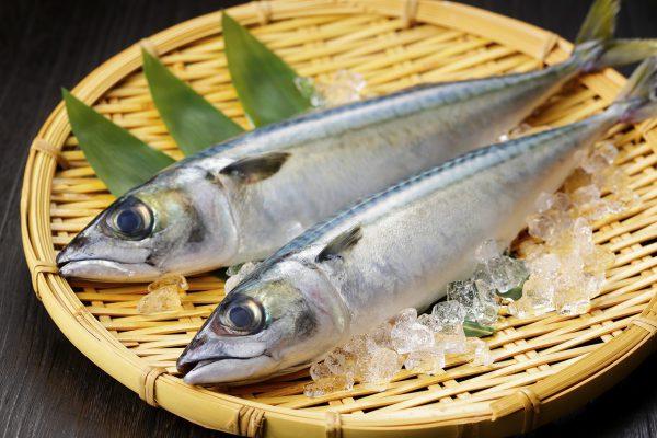 たんぱく質が含まれる青魚